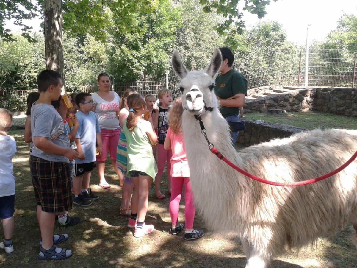 szülinapi rendezvények gyerekeknek Szülinap Pécsen a város feletti vadonban, élménydús születésnap  szülinapi rendezvények gyerekeknek