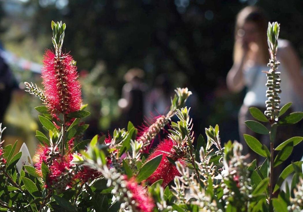 289636c78e Dísznövény Szakkiállítás és Vásár 2019. Tavaszkert a Budai Arborétumban