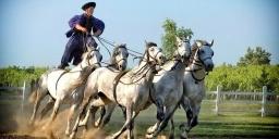 e39c6097bcbc Rádpusztai lovaglás, lovaskocsizás szállással Balatonfenyvesen a  Hubertus-Hof Landhotelben